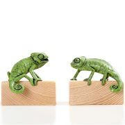 Chameleons 'Agape' and 'Enrapt'