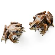 Common Frog, two poses