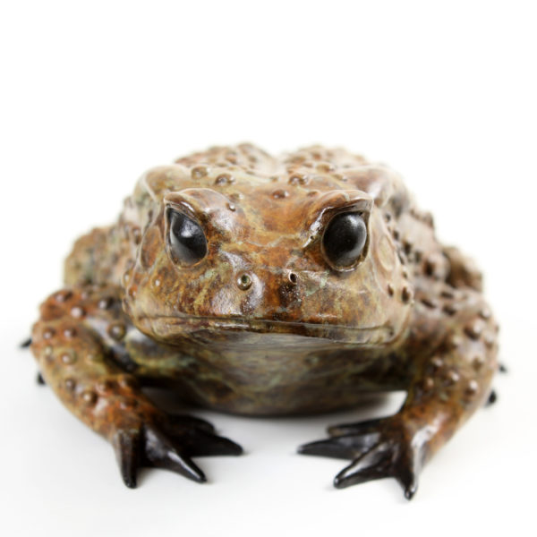 Common Toad, Female
