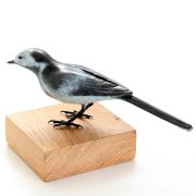 Pied Wagtail, Male