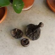 Pomarius_Found and Foraged