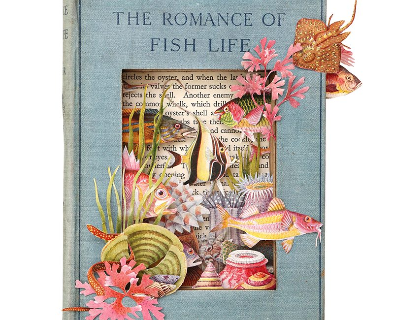 The Romance of Fish Life – A2 print by Alison Stockmarr
